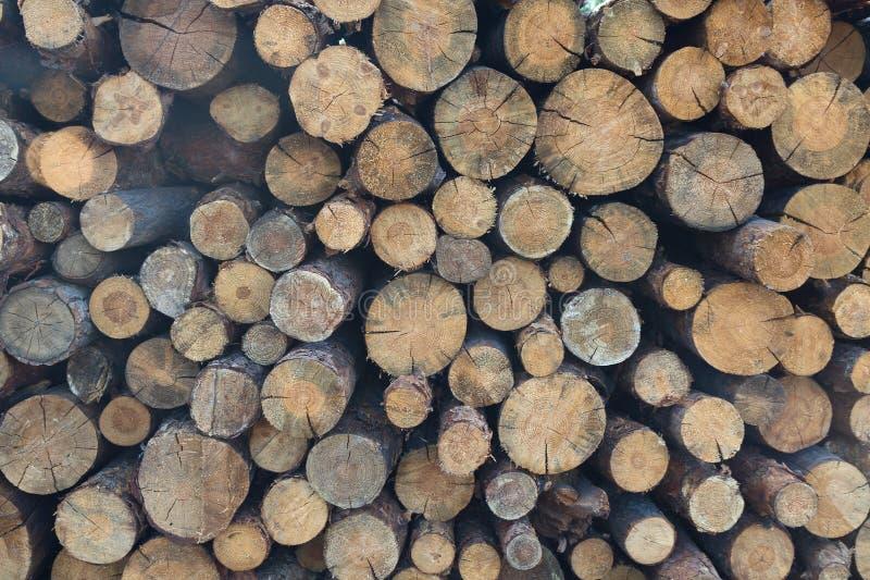 Troncos de árbol apilados para el retiro foto de archivo libre de regalías