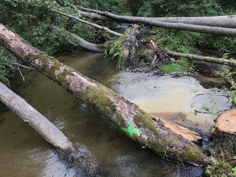 Troncos de árbol caidos sobre corriente rápida del agua de la montaña foto de archivo