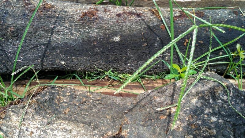 Troncos de árbol con los hongos en el tronco foto de archivo libre de regalías