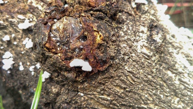 Troncos de árbol con los hongos en el tronco fotos de archivo