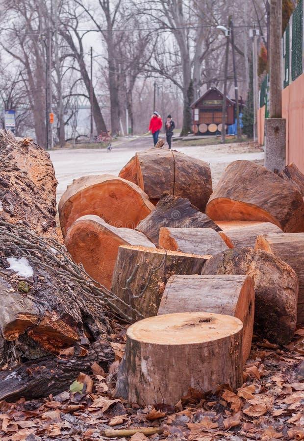 Troncos de árbol de Cutted en la calzada fotografía de archivo