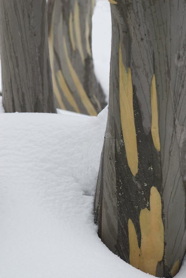 Troncos de árbol en la nieve imagen de archivo libre de regalías