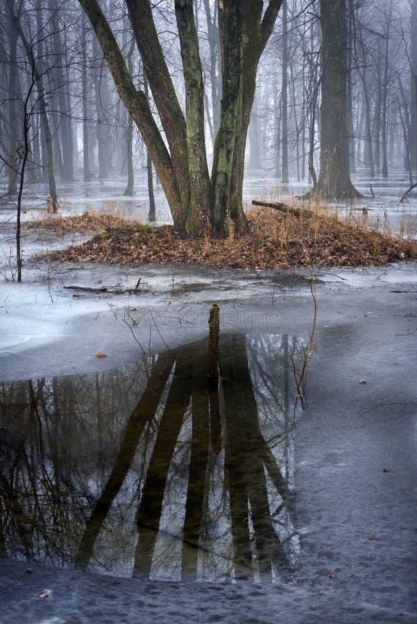 Troncos de árbol encerrados en hielo con reflejos en agua oscura imagen de archivo libre de regalías