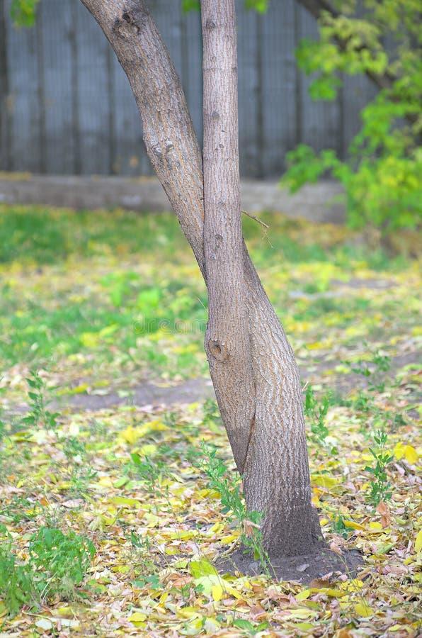 Troncos de árbol entrelazados foto de archivo
