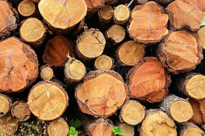 Troncos de árbol de la pila cercanos encima del material rústico del eco de la textura del diseño material natural de la base foto de archivo libre de regalías