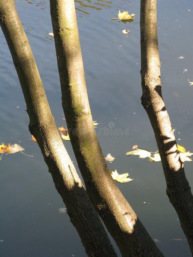 Troncos de árbol por el río imágenes de archivo libres de regalías