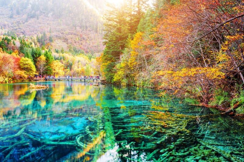 Troncos de árbol sumergidos fantásticos en el agua del lago cinco flower fotografía de archivo