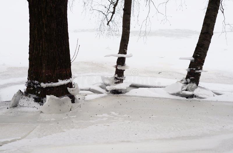 Troncos de árboles en el invierno foto de archivo libre de regalías
