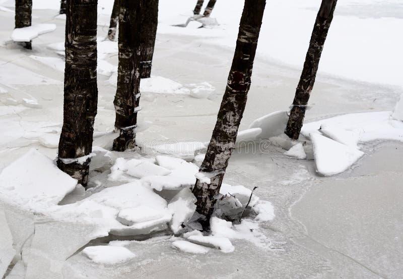 Troncos de árboles en el invierno foto de archivo