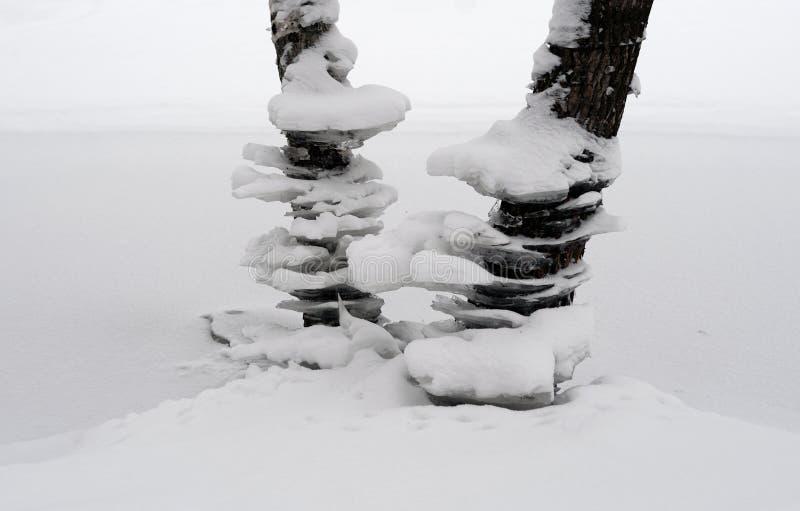 Troncos de árboles en el invierno fotografía de archivo