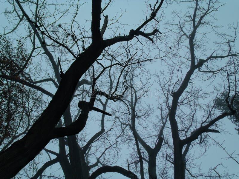 Troncos de árboles grandes imágenes de archivo libres de regalías