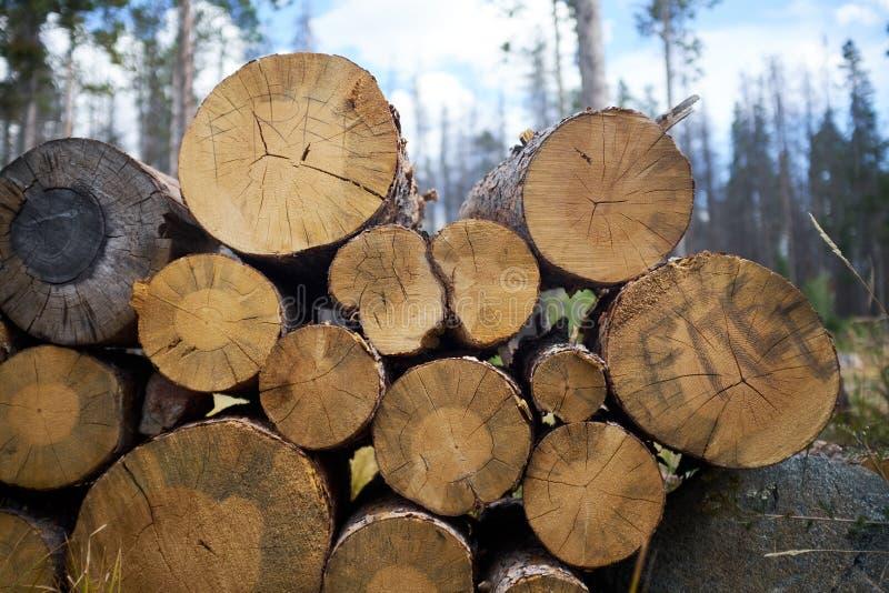 Troncos de árvore abatidos empilhados em uma floresta imagem de stock