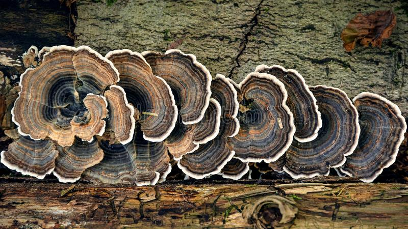 Troncos de árvore com cogumelos da árvore fotos de stock royalty free
