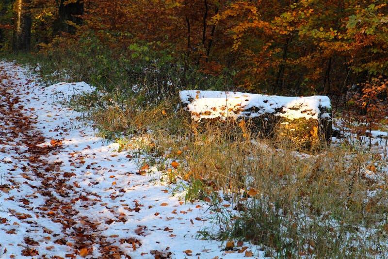 Troncos de árvore com neve fresca imagens de stock royalty free
