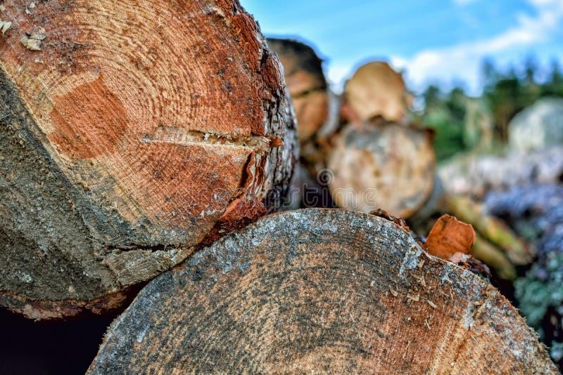 Troncos de árvore cortados no primeiro plano e no fundo unfocussed imagem de stock