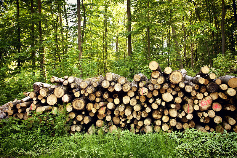 Troncos de árvore desbastados empilhados foto de stock royalty free