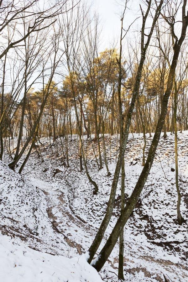 Troncos de árvore desencapados na floresta do inverno foto de stock royalty free