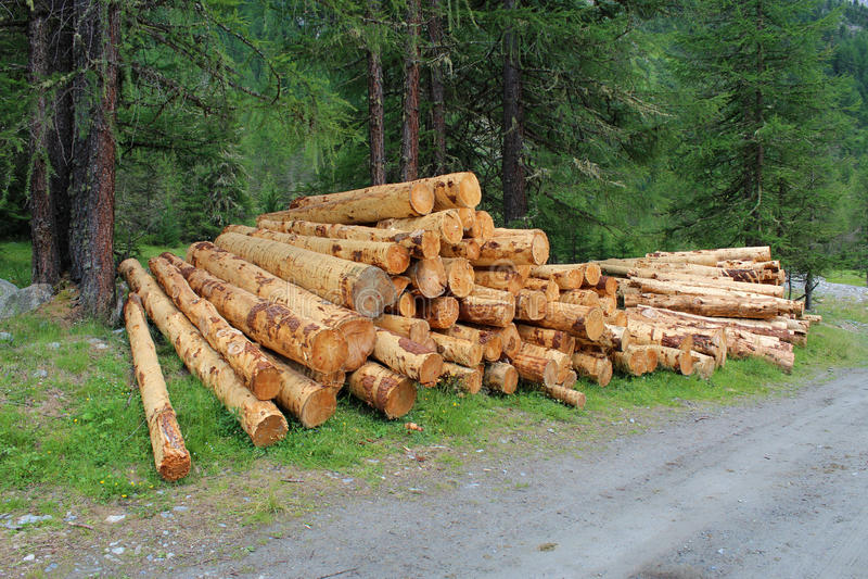 Troncos de árvore empilhados foto de stock royalty free