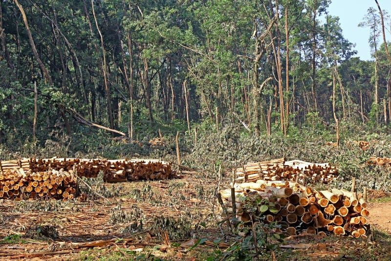 Troncos de árvore empilhados do desflorestamento imagem de stock