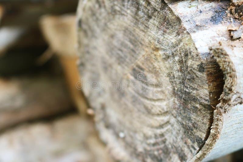 Troncos de árvore empilhados em uma estrada imagens de stock royalty free