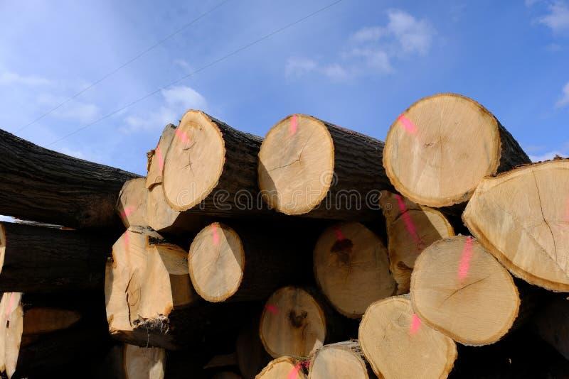 Troncos de árvore empilhados para o transporte após o registro fotos de stock royalty free