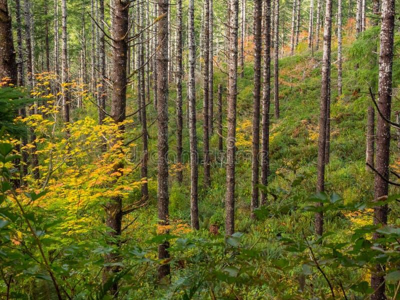 Troncos de árvore no lado da montanha do outono fotos de stock royalty free