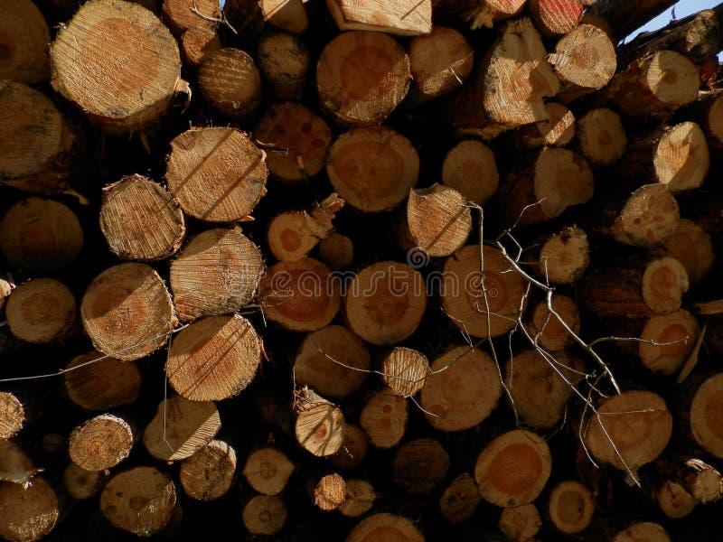 Troncos de árvores imagem de stock royalty free