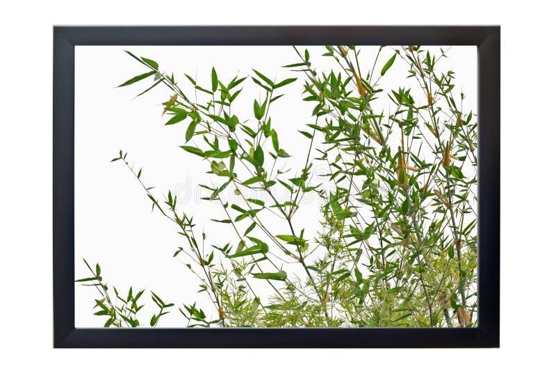 Troncos de bambú en marco negro foto de archivo libre de regalías
