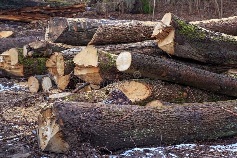 Troncos de la madera en la tierra imagenes de archivo