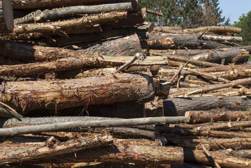 Troncos de los árboles de pino fotografía de archivo libre de regalías