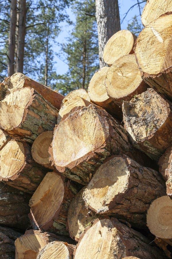 Troncos de los pinos, madera imágenes de archivo libres de regalías