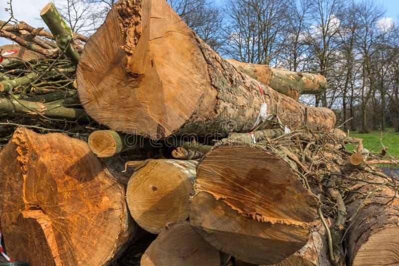 Troncos do close-up das árvores fotografia de stock royalty free