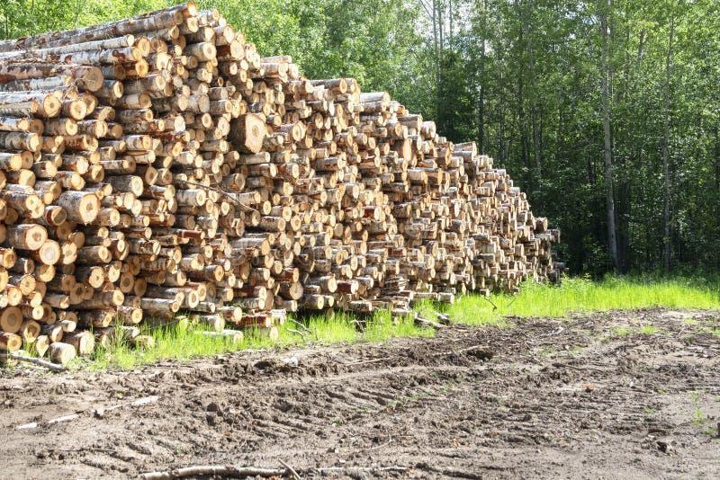 Troncos do corte das ?rvores e empilhados Logs de madeira com a floresta no fundo Woodpile de logs recentemente colhidos imagens de stock royalty free