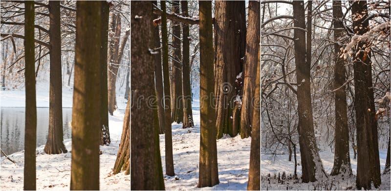 Troncos e ramos de árvore cobertos de neve Paisagem bonita do inverno com neve e lago inverno na floresta, sol que brilha através fotos de stock royalty free