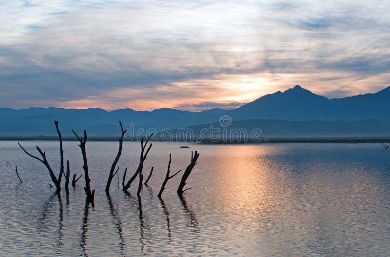 Troncos e ramos de árvore inoperantes que picam fora do lago sinistrado Isabella no nascer do sol nas montanhas de Sierra Nevada  fotografia de stock royalty free