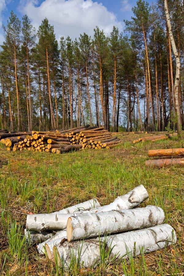 Download Troncos Em Um Glade Da Floresta Imagem de Stock - Imagem de renewable, registro: 26515621