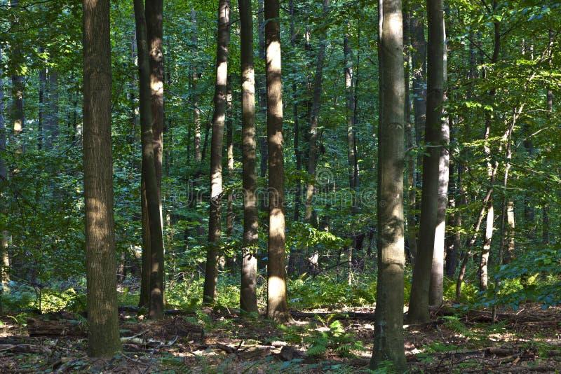 Troncos en bosque verde fotos de archivo libres de regalías