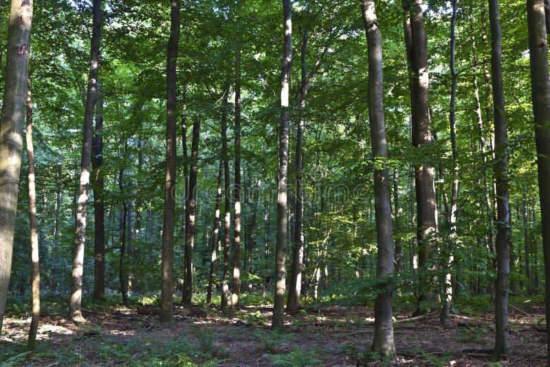 Troncos en bosque verde fotografía de archivo