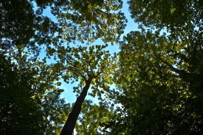Troncos en bosque verde foto de archivo libre de regalías