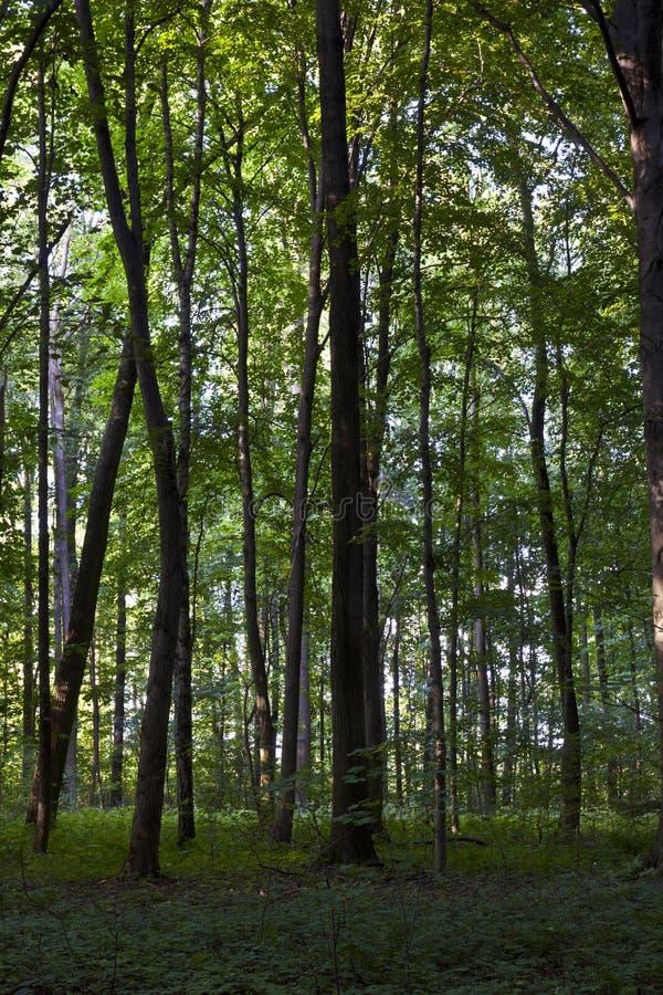 Troncos en bosque verde imagen de archivo
