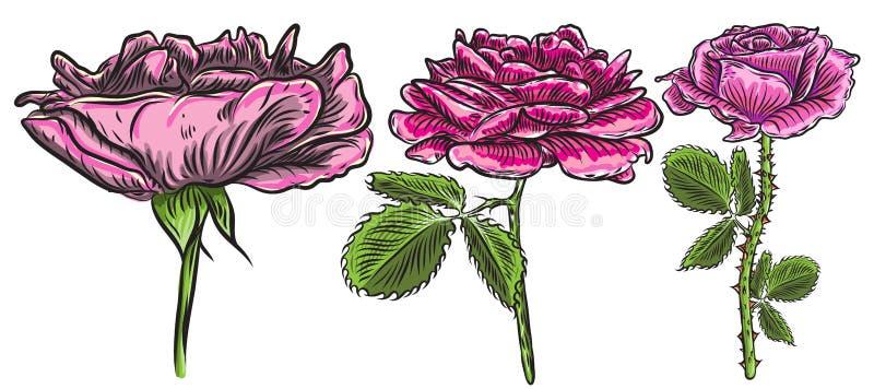 Troncos hermosos de las rosas rojas y de las hojas fijados Bou del arreglo floral ilustración del vector