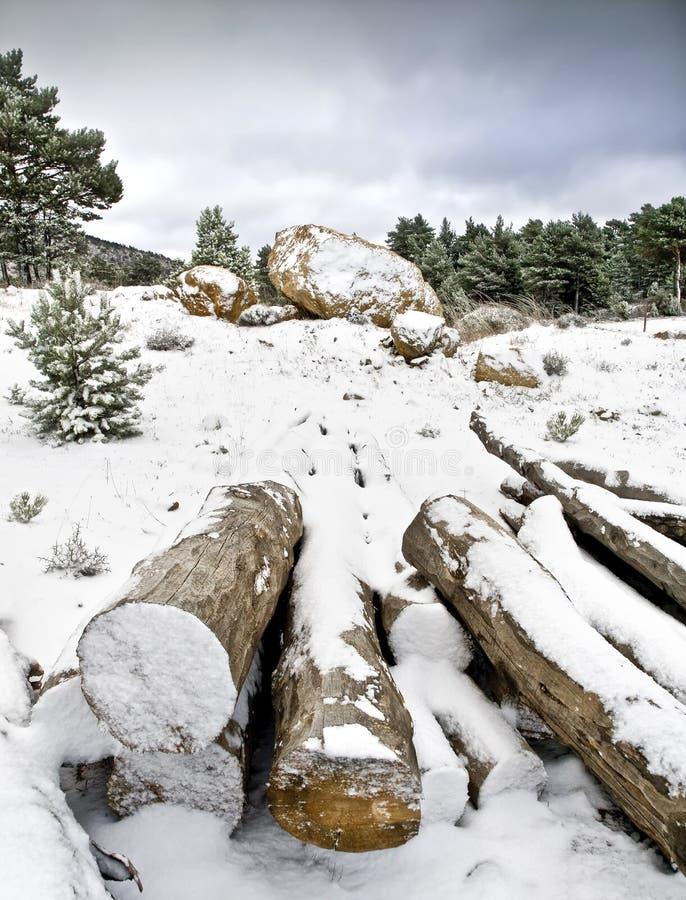 Troncos na neve imagens de stock