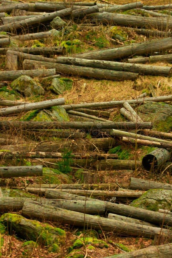 Troncos truncados na floresta muitas árvores abatidas imagens de stock