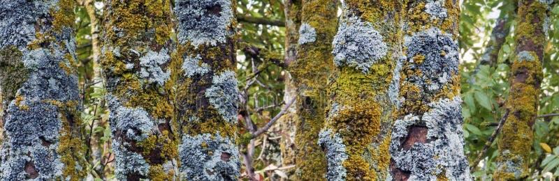 Troncos viejos del árbol forestal fotografía de archivo