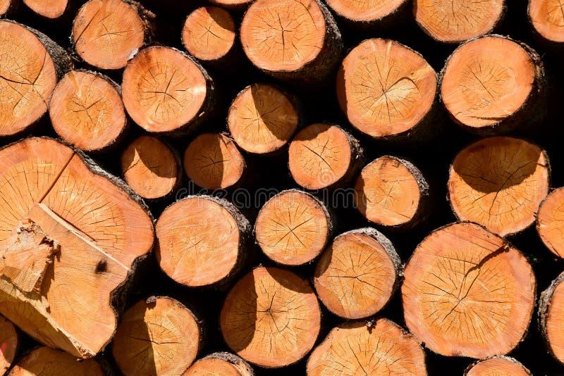 Troncs d'arbre abattus par l'industrie de notation de bois de construction image libre de droits