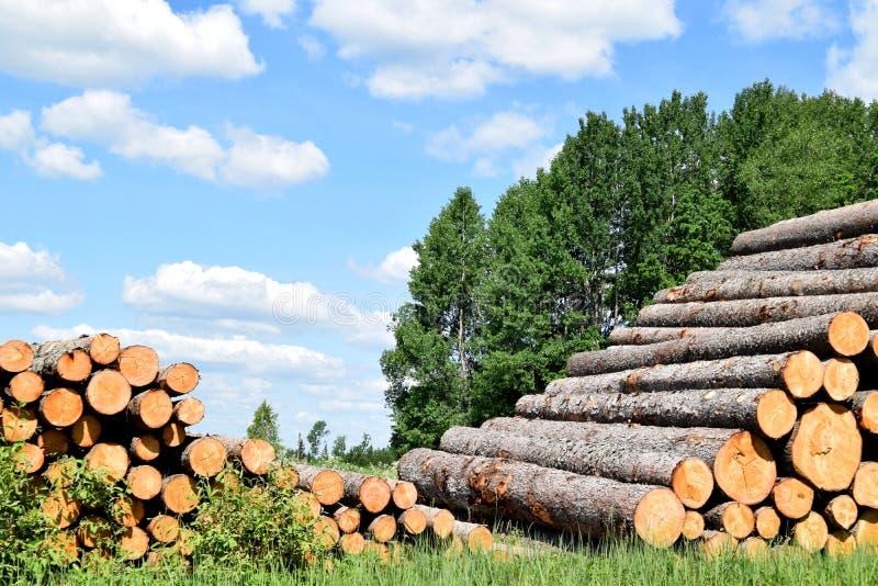 Troncs d'arbre abattus par l'industrie de notation de bois de construction image stock