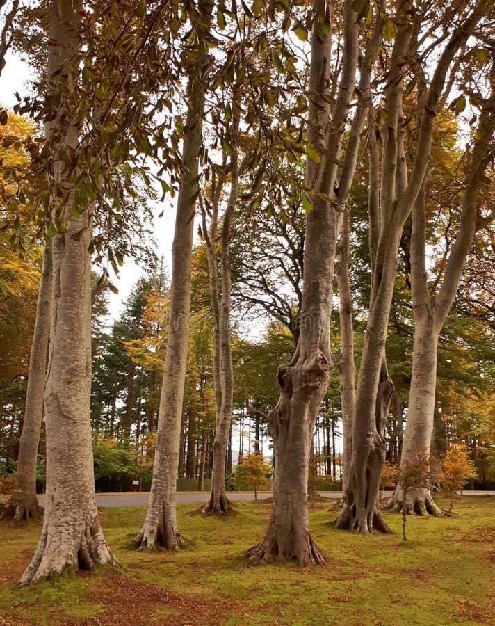 Troncs d'arbre d'automne image libre de droits