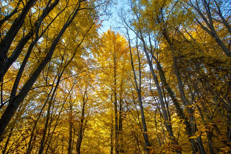 Troncs d'arbre d'automne image stock