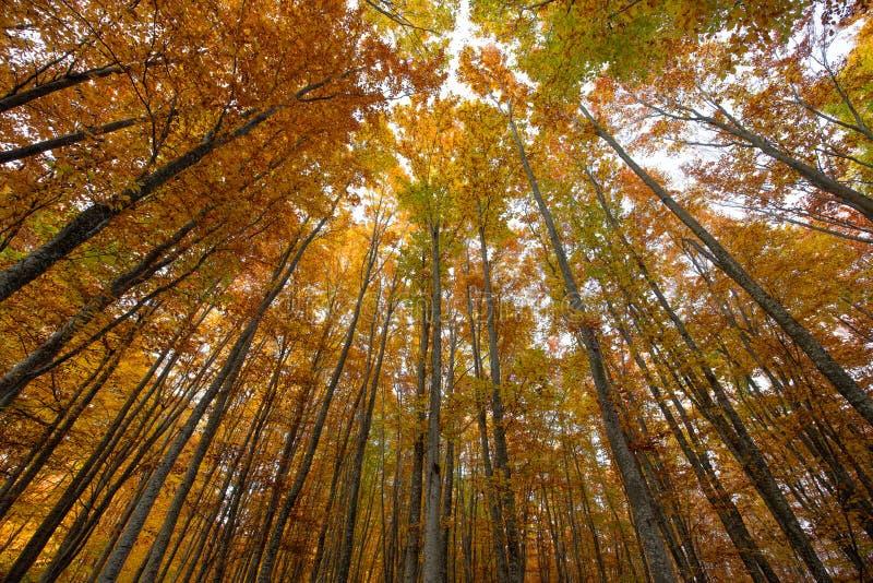 Troncs d'arbre d'automne photographie stock