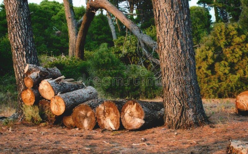 Troncs d'arbre empilés dans une pile dans une forêt photo libre de droits